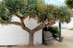 A folha bonita, luxúria em árvores ajustou-se contra a construção com os tambores de madeira velhos Fotos de Stock Royalty Free