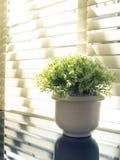 A folha bonita no vaso com máscara e a sombra iluminam-se fotografia de stock