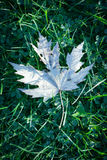 Folha branca na grama Fotos de Stock