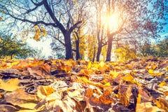 Folha brilhante no parque do outono Fotos de Stock Royalty Free