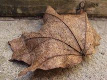folha caída Foto de Stock