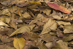 folha caída Fotos de Stock
