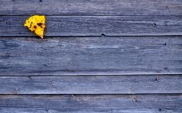 Folha caída amarela colorida do outono no fundo cinzento de madeira Foto de Stock Royalty Free