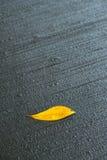 Folha caída amarelo no pavimento frio molhado Imagem de Stock Royalty Free