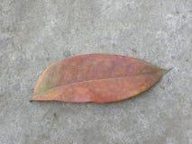 Folha caída cor do marrom avermelhado na terra fotos de stock