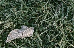 Folha caída gelado Foto de Stock Royalty Free