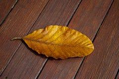 Folha caída na ponte de madeira Foto de Stock