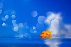 Folha caída na água Fotos de Stock