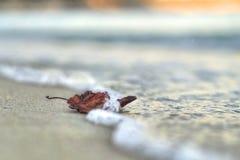 Folha chamuscada só na areia, lavada pela onda Fotos de Stock Royalty Free