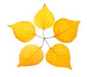 Folha cinco amarela coloc como uma estrela do pentactinal Imagens de Stock Royalty Free
