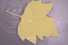 Folha colorida brilhante do outono que flutua no vintage Fil retro da água Fotografia de Stock