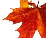 Folha colorida detalhada vibrante do outono foto de stock