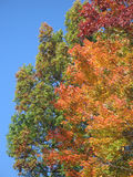 Folha colorida do outono Imagem de Stock
