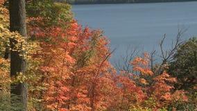 Folha colorida do outono video estoque