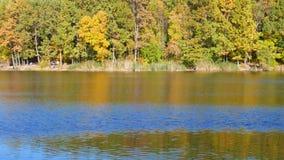 Folha colorida do outono com lago vídeos de arquivo