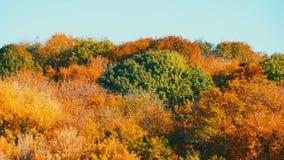 Folha colorida do outono da paisagem pitoresca em árvores na floresta na natureza filme