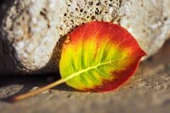 Folha colorida na pedra e na areia imagens de stock