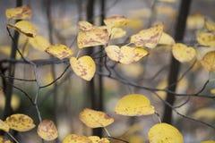 Folha colorida no fundo do céu das folhas de outono do parque do outono Fotos de Stock Royalty Free