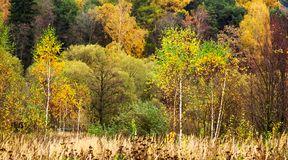 Folha colorida no parque do outono Fotografia de Stock Royalty Free