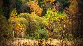 Folha colorida no parque do outono fotos de stock
