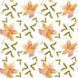 Folha colorida tirada mão da queda do bordo da aquarela sem emenda do teste padrão e árvore de bordo voada das sementes isoladas  ilustração stock