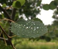 Folha com água da chuva imagem de stock
