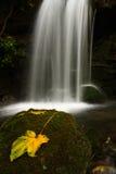Folha com cachoeira Fotografia de Stock