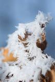 Folha com cristal do esmalte Fotografia de Stock