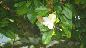Folha com flor Fotografia de Stock