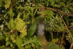 Folha com folhas verdes Imagens de Stock Royalty Free