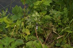 Folha com folhas verdes Fotografia de Stock Royalty Free