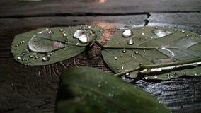 Folha com gotas da água Fotografia de Stock