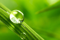 Folha com gotas da chuva - imagem conservada em estoque Fotografia de Stock