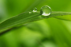 Folha com gotas da chuva - imagem conservada em estoque Imagem de Stock Royalty Free