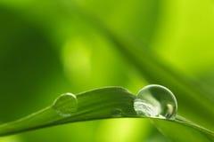 Folha com gotas da chuva - imagem conservada em estoque Foto de Stock Royalty Free
