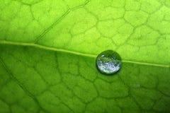 Folha com gotas da água Imagem de Stock