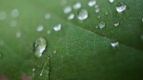 Folha com gotas de água Fotografia de Stock Royalty Free