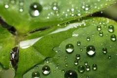 Folha com gotas de água após a chuva foto de stock