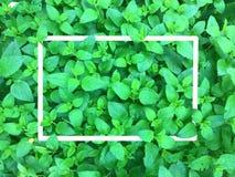 Folha com quadro branco, folha verde abstrata, folha verde minúscula, fundo verde natural foto de stock