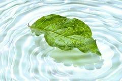 Folha com reflexão da água Fotos de Stock