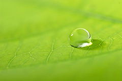 Folha com uma gota da água Foto de Stock