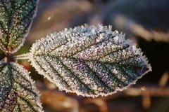 Folha congelada Imagens de Stock