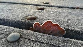 Folha congelada caída sobre uma tabela de madeira foto de stock