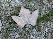 Folha congelada na terra fotos de stock