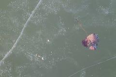 Folha congelada no gelo no lago Neusiedl Fotografia de Stock Royalty Free