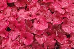 Folha cor-de-rosa Imagens de Stock