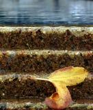 Folha da água Imagem de Stock Royalty Free