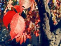 Folha da árvore Imagem de Stock Royalty Free