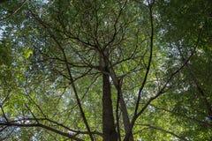Folha da árvore fotos de stock