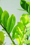 A folha da árvore Fotografia de Stock